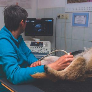 veterinary photo006
