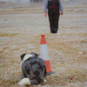 dog trainer001