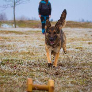 Dog trainer004