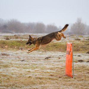 Dog trainer005