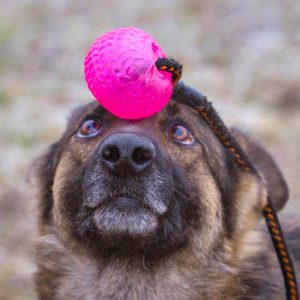 Dog trainer006