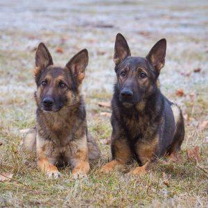 dog trainer009
